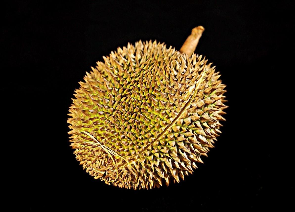 Полезные свойства фрукт дуриан