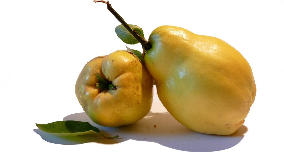Полезные свойства айвы – польза, противопоказания, рецепты