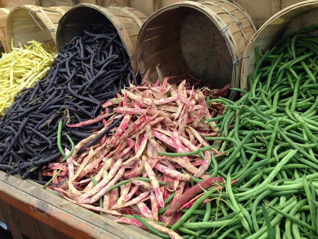 Разнообразные сорта фасоли