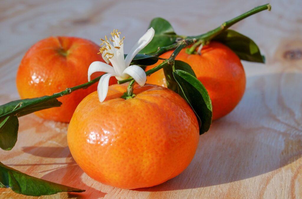 Плоды и цветки клементина